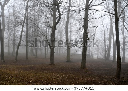fog in forest, in the park