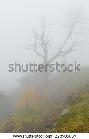 Fog in forest - Shenandoah National Park in Virginia, United States - stock photo