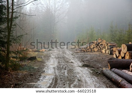 Fog in forrest, mud, trees - stock photo