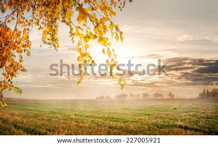 Fog in the autumn field in the morning - stock photo
