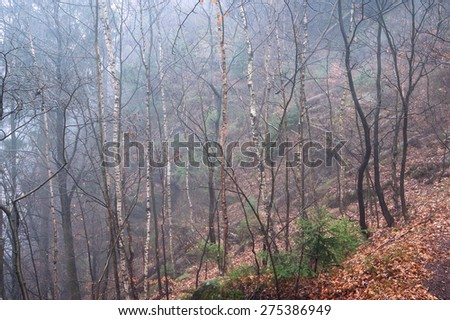 Fog in the autumn forest with yellow leaves on the ground - stock photo