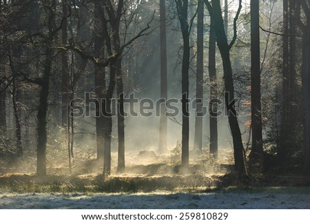 Fog in the forest during a cold, spring sunrise. - stock photo