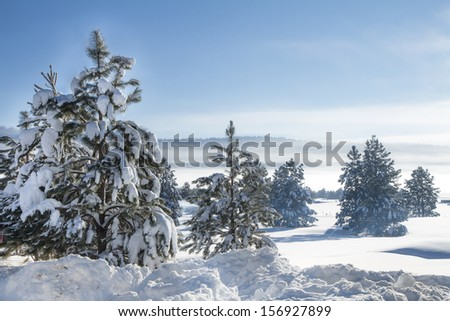 Fog in the hills with lots of snow covered trees. - stock photo