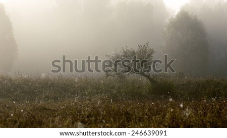 fog in the morning, Altay, Russian, Forest - stock photo