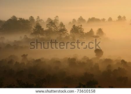 Fog in the morning at Tung Salang Luang Thailand - stock photo