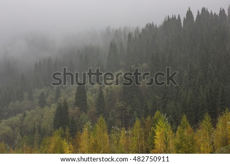 Fog in the mountains, pine trees in the mountains