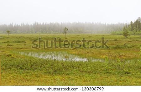 Fog in the swamp - stock photo