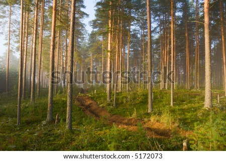 fog in wood - stock photo