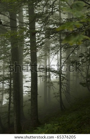 Fog in wood on mountain slope - stock photo