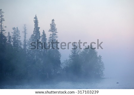 Fog on the river surrounded by wild forest