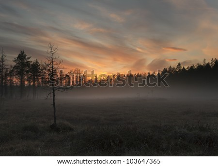 Fog over marsh, wide angle photo, southern of Sweden - stock photo