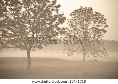 Fog, trees and meadow. Early in the morning scene. Sepia tone. Focus on left tree. - stock photo