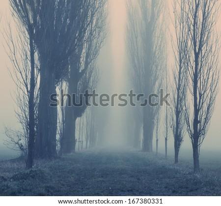 Foggy autumn day  - stock photo