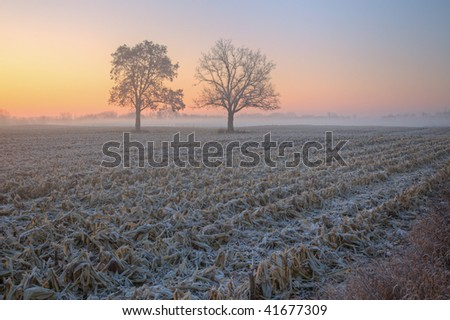 Foggy autumn landscape at dawn of bare trees and frosted, harvested corn field, Michigan, USA - stock photo