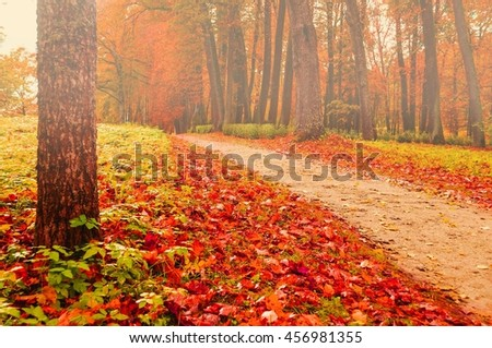 Foggy autumn landscape view of foggy autumn park with fallen autumn leaves, soft filter applied -beautiful autumn landscape in cloudy weather with yellowed autumn trees along lonely autumn alley - stock photo