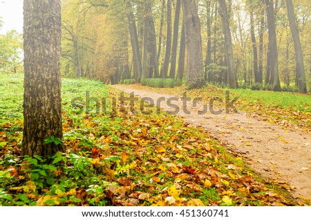 Foggy autumn landscape view of foggy autumn park with fallen autumn leaves, soft focus processing -beautiful autumn landscape in cloudy weather with yellowed autumn trees along lonely autumn alley - stock photo