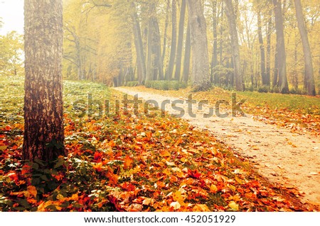 Foggy autumn landscape view of foggy autumn park with yellowed fallen autumn leaves, soft focus applied - autumn landscape in cloudy weather with yellowed autumn trees along lonely autumn alley - stock photo