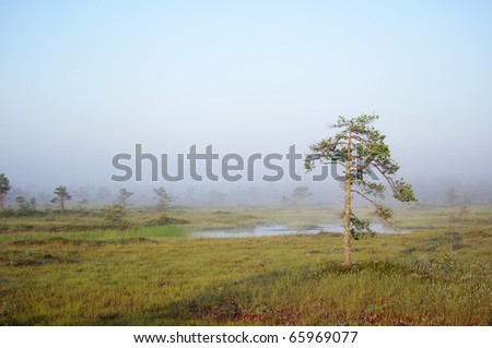 foggy autumn morning in swamp - stock photo