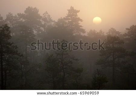 foggy dawn in swamp - stock photo