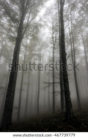 Foggy day in a forest.