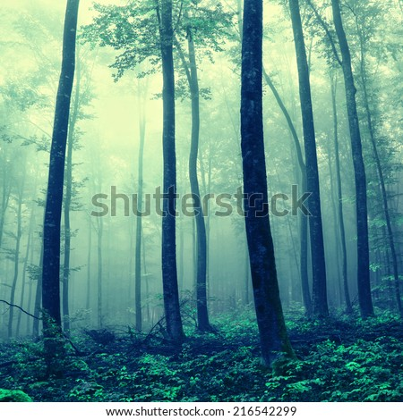 Foggy fantasy blue green forest trees. Color filter effect used. - stock photo