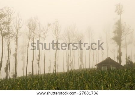 foggy farmland - stock photo
