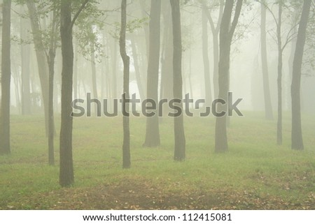 Foggy forest - stock photo