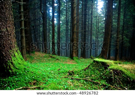 foggy forest at the morning at autumn - stock photo