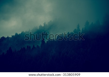 Foggy Forest Background. Forest Tree Lines Layers. Dark Green Color Grading.