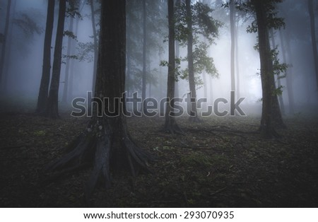 foggy forest blue light in evening - stock photo