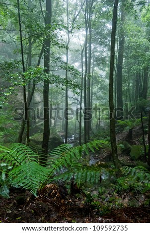 Foggy forest in Blue Mountains National Park, Australia