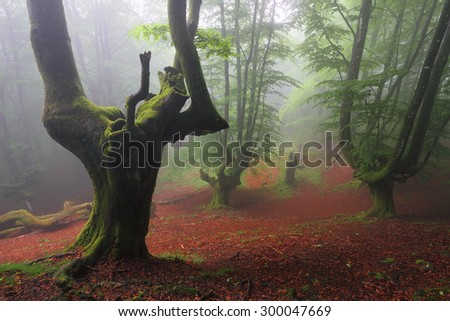 Foggy forest in spring - stock photo