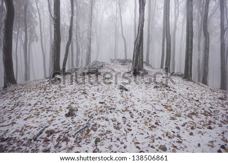 Foggy forest in winter - stock photo