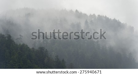 Foggy forest, Skeena-Queen Charlotte Regional District, Haida Gwaii, Graham Island, British Columbia, Canada