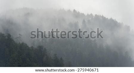 Foggy forest, Skeena-Queen Charlotte Regional District, Haida Gwaii, Graham Island, British Columbia, Canada - stock photo