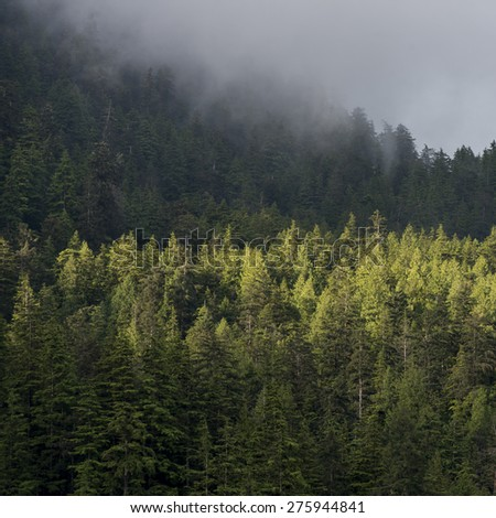 Foggy forest, Skeena-Queen Charlotte Regional District, Haida Gwaii, Graham Island, British Columbia, Canada - stock photo