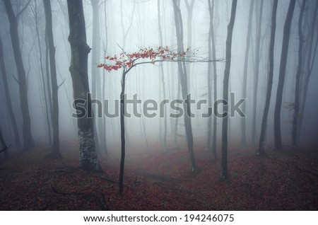 foggy forest with small tree soft tones - stock photo