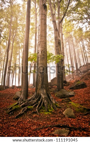 Foggy forest with tree - stock photo