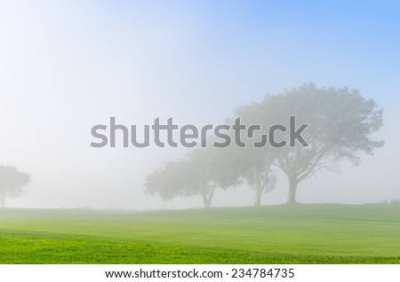 Foggy Golf Course - stock photo