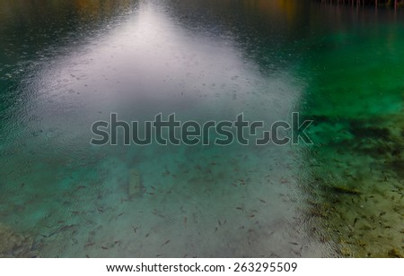 Foggy lake with submerged tree trunks in the rain (fragment with small fish. Jiuzhaigou Valley was recognize by UNESCO as a World Heritage Site and a World Biosphere Reserve - China - stock photo