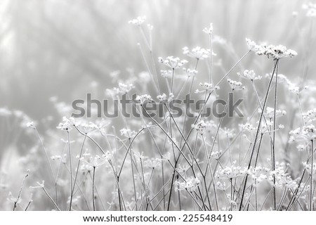 Foggy landscape. Field in morning october mist - stock photo