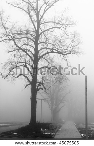 Foggy lane and bare trees - stock photo