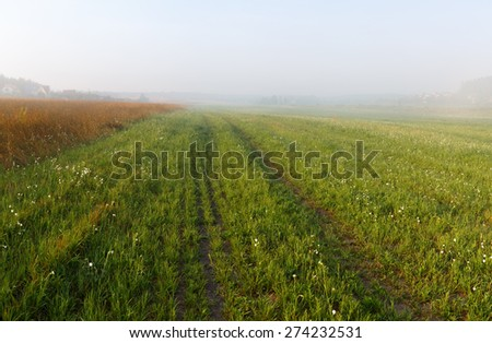 Foggy meadow at morning. Rural landscape with bright green grass. - stock photo