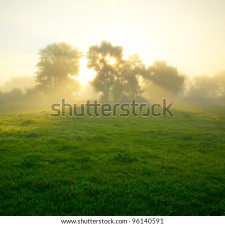 Foggy meadow at sunrise - stock photo