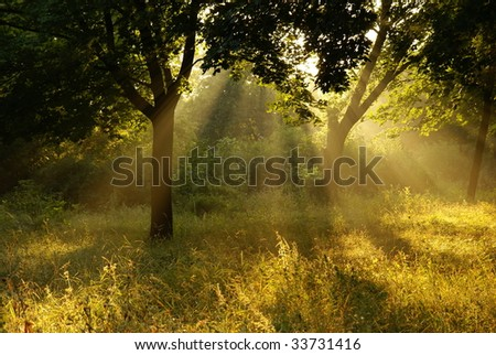 Foggy morning - stock photo