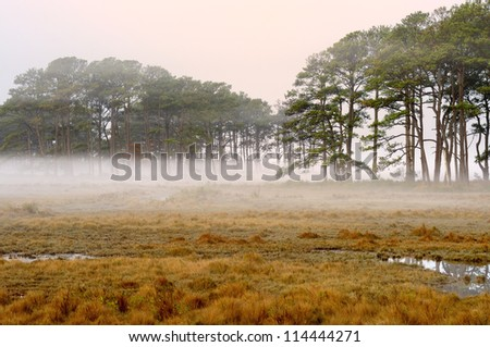 Foggy Morning at Wetlands - Chincoteague National Wildlife Refuge, VA - stock photo