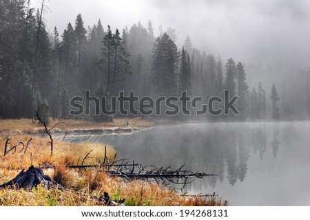 Foggy morning at Yellowstone - stock photo