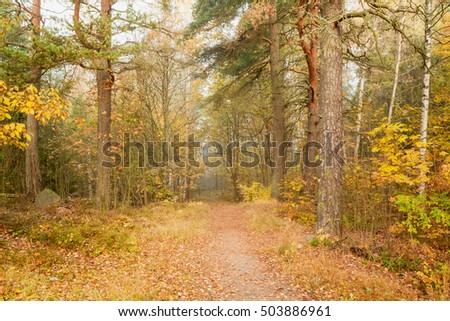 Foggy morning autumn forest nature landscape