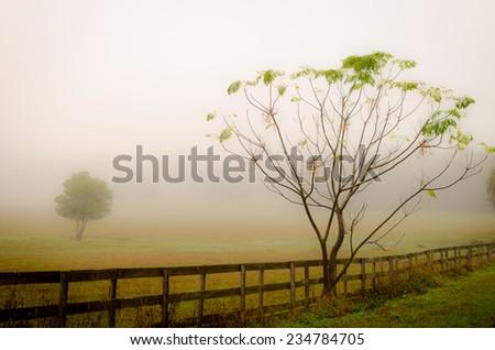 Foggy Morning Fence - stock photo