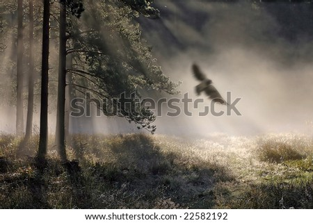 Foggy morning in a wood with bird
